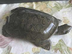 Zhangjiajie Tortoise Figure Stone