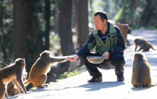 Monkeys are 'My kids', Zhangjiajie caretaker says