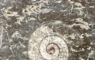 Ancient marine life fossils on pavements add beauty to Central China